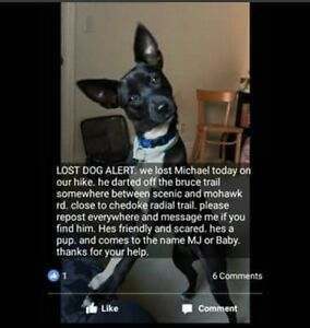 Have you seen this dog??