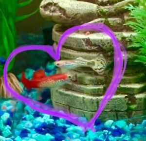 2 lovely Fish in need of a new home!!!