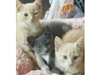 Kittens for sale!!!!