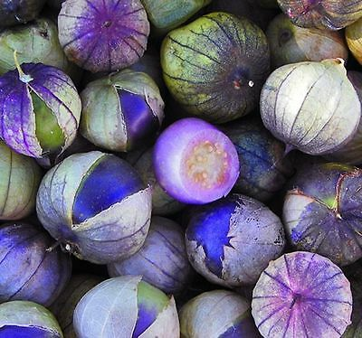 Purple Tomatillo Tomato seeds 30 seeds HEIRLOOM. ***SAME DAY SHIPPING*** on Rummage