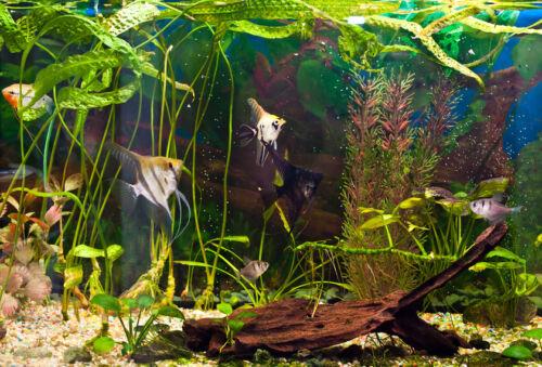 Ratgeber arzneimittel und pflegeprodukte f r zierfische for Zierfische aquarium