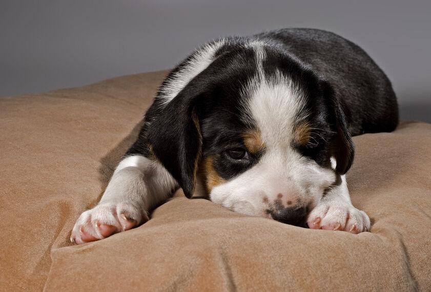 Hundekissen, Decke, Näpfe, Unterlage - die Grundausstattung für den Hund