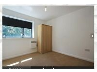 1 double room in a 2 bed flat