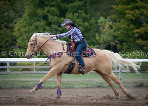 Gorgeous Palomino Quarter Horse for Lease