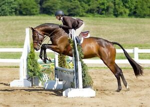 Shadowlane Stables Feature Horse For Sale - Genuine aka Gwen