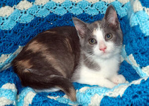 Rescued Kittens for Adoption!!
