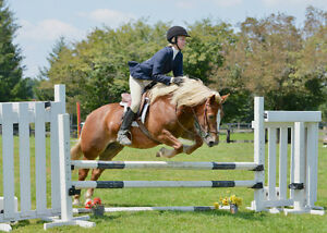 Lovely pony for Riding lessons :) Kitchener / Waterloo Kitchener Area image 9