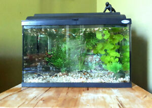 Fully set up Aquarium with Fancy Guppies