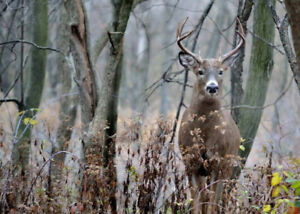 HUNTING  LAND IN HEMMINGFORD available for 2019 deer season