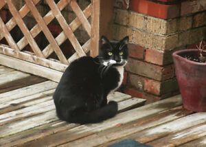 Seeking Information on Tuxedo (black and white) cat in Fairview