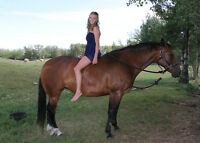 8 year oldmare for sale