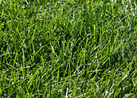 Need help getting your lawn in shape for the holiday?
