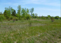 3.5 Acre Building Lot in Odessa For Sale