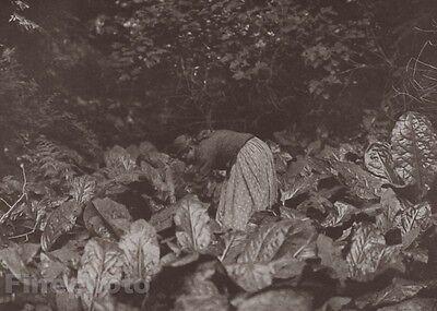 1900/72 Photo Gravure NATIVE AMERICAN INDIAN Farming Cabbage EDWARD CURTIS 11x14