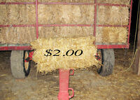straw -oats for sale