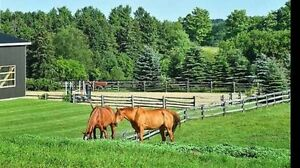 Horse Boarding, Training, Lessons and Sales