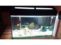 Fully set up fish tank with fush