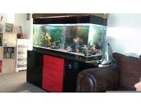 4ft clearseal tropical aquariam complete with unit and fish plus ornaments and food