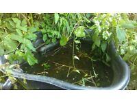 Small plastic pond