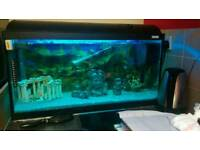 2.5 ft fish tank with fish and extras