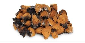 CHAGA. GIFT FROM THE GODS!!