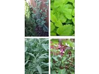 Trees & Plants x4 - these are 3x more in a Garden Centre - See Ad for Prices or £20 the Lot