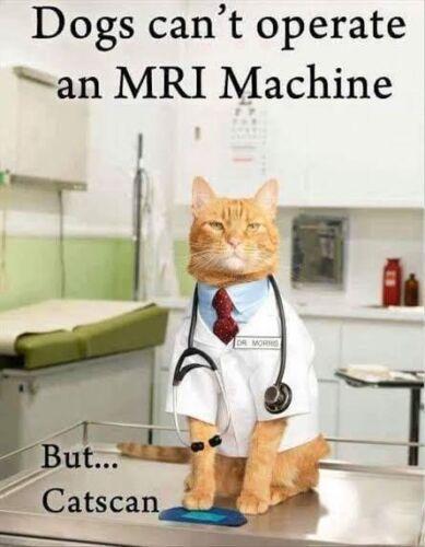 Funny Cat  Refrigerator magnet 3 1/2  x 4 1/2