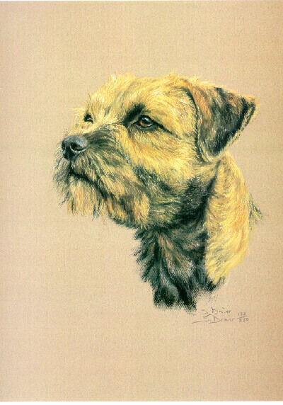 Border Terrier Limited Edition Art Print by UK Artist Sue Driver*