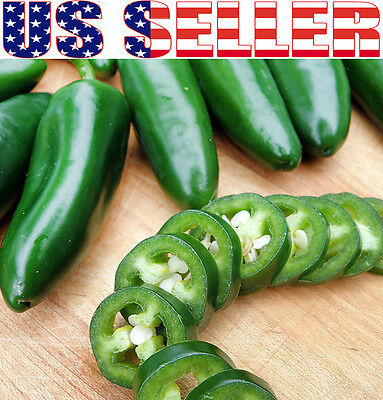 Mexican Pepper - 30+ ORGANICALLY GROWN Jalapeno Pepper Seeds Chili HOT Heirloom NON-GMO Mexican