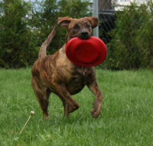 KONG Flyer Accurate Flight Soft Catch Rubber Frisbee Flying