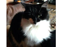 Black and White Cat Still Missing. £50.00 Reward If Found.