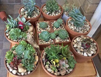 Super cheap garden (plant) sale $2 to $35