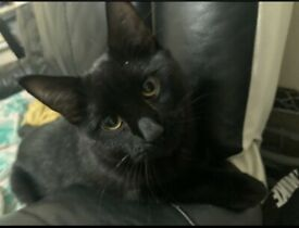 MISSING CAT LE3 AREA LEICESTER!!