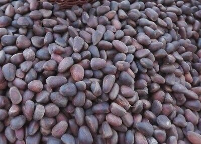 Organic Siberian Cedar nuts / Pine nuts (in shell) / 1 pound or 450 gr