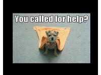 Dog walking/ Pet services