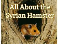 Rosie looking to buy Syrian hamster