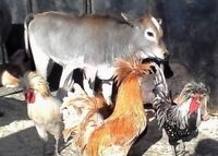 Mobile Petting Zoo for events, birthdays, promotions