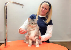 CAT BOARDING, Cat Grooming, DELIVERY at... MANOIR KANISHA