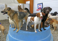 Back in the Pack's DOG DAYCARE next to Bowness RONA 16th Av NW