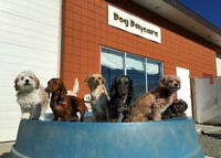Small Dog expansion at Back in the Pack dog daycare NW