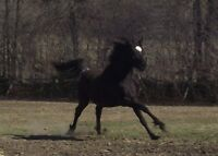 Young athletic horse - Endurance prospect!
