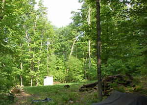 Haliburton Real Estate Team-Lot Near Salerno Lake Access-$49,000