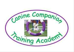 Internationally Certified Dog Trainer-classes starting Aug 31st!