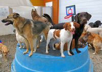 Back in the Pack's DOG DAYCARE next to 16th Av NW Bowness RONA