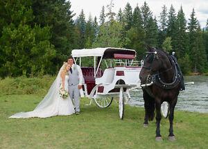 Horse Drawn Wedding Carriage and Sleigh Edmonton Edmonton Area image 4