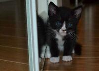 Cute Kittens FREE