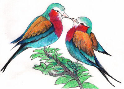 Bird couple kiss drawing Art Print ACEO Collectible Gift Card Ink Draw NY Artist