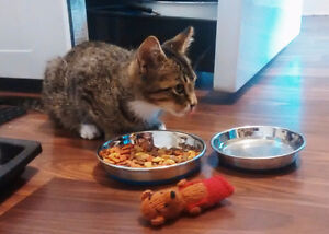 Friendly, playful male kitten for a loving home