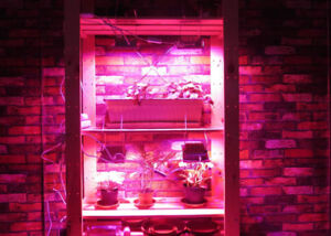 12W LED Plant Grow Light Flood Light with Cable and Plug