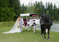 Horse Drawn Wedding Carriage and Sleigh